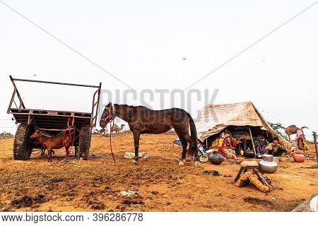 Pushkar, India - November 2020: A Horse And A Goat Of A Nomadic Family.tourist Visit Pushkar Mela.