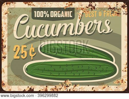 Cucumbers Rusty Metal Plate, Vector Price Tag For Farm Market, Vintage Rust Tin Sign. Fresh Cucumber