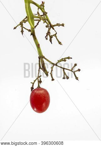 Conceptual Image, Ripe Red Grape On Bunch, Only One Bunch Of Grapes Left. Isolated On White Backgrou