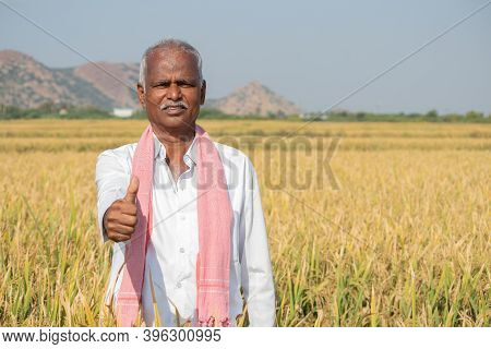 Indian Farmer With Thumps Up Gesture Standing In Middle Of Harvested Crops - Concpet Of Good Or Bump