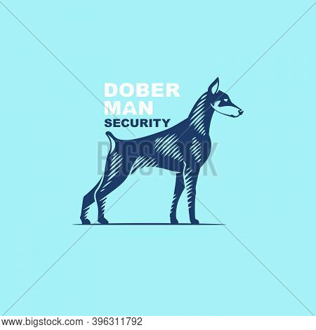 Doberman Pinscher Logo In Classic Engraving Style. Vector Emblem For Your Security Corporate Identit