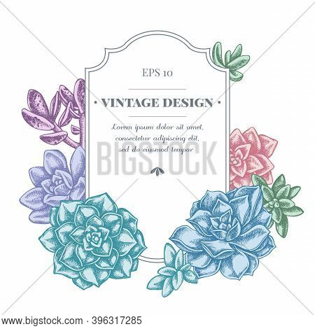 Badge Design With Pastel Succulent Echeveria, Succulent Echeveria, Succulent Stock Illustration
