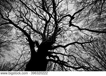 Black And White Photo Of Dead Winter Tree. Nature Conceptual Image.
