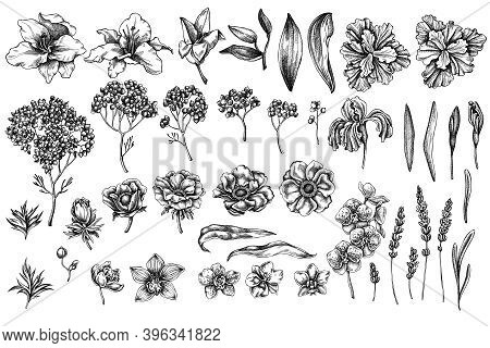 Vector Set Of Hand Drawn Black And White Anemone, Lavender, Rosemary Everlasting, Phalaenopsis, Lily
