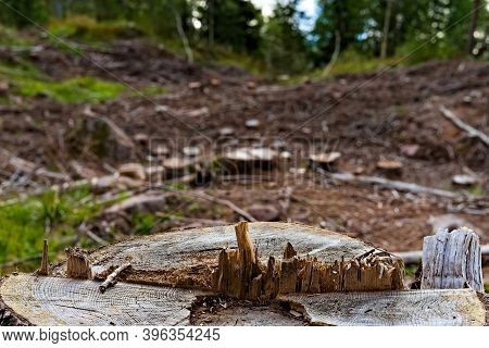 Close Up Of A Pine Tree Stub With A Blurred Clearing Of The Forest In The Background.