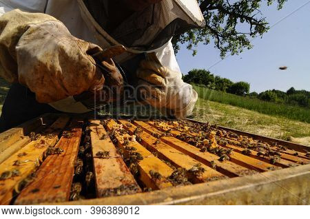 Beekeeper At Work At The Beehive, Beekeeping And Honey Production