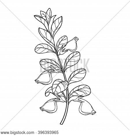 Vector Branch Of Outline Nematanthus Or Goldfish Plant With Flower And Leaf In Black Isolated On Whi
