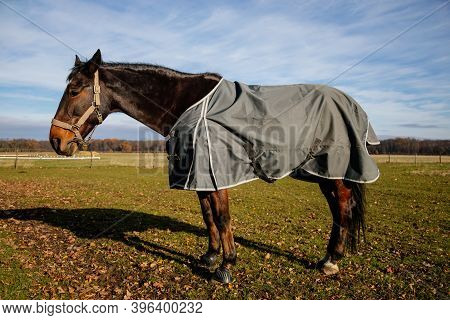 Brown Adult Horse Covered With Horse Blanket, Standing In The Meadow. Beautiful Horse On The Field I
