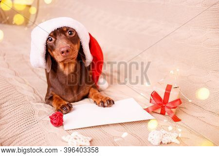 A Dachshund Puppy In A Christmas Hat Is Lying On The Couch With A Wish List. Christmas Greeting Card
