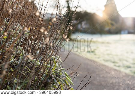Frozen Stem Of Dry Lavender With Rime In Foreground Of A Road And Field In The Morning Sun. Rural Sc