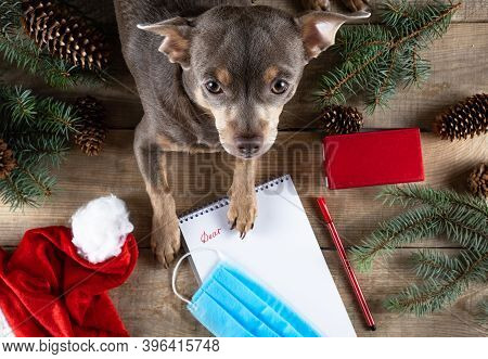 Letter To Santa Dog. Dear Santa. Letter To Santa Claus. Santa Claus Wish List. Believe In Miracles.