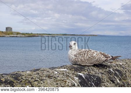 Seabirds At The Harbour Of Balbriggan Irland.