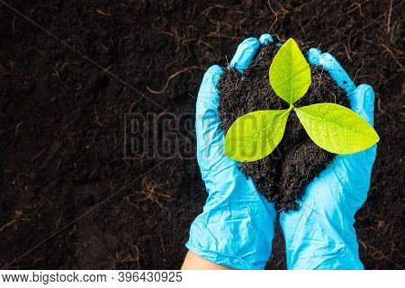 Hand Of Researcher Woman Wear Rubber Gloves Holding Growing And Nurturing Tree Growing On Fertile Bl