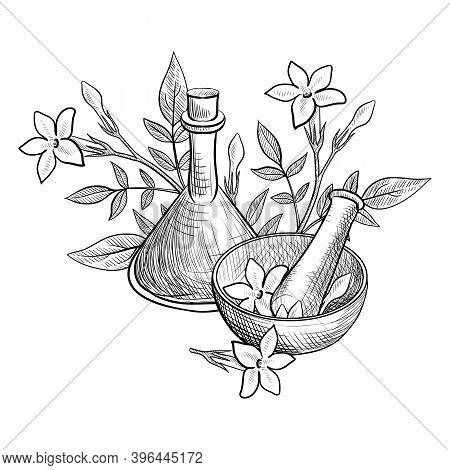 Vector Drawing Jasmine Essential Oil, Jasminum Officinale, Bottle, Mortar And Pestle At White Backgr