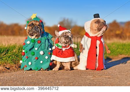 Funny Adult And Puppy French Bulldog Dogs Dressed Up With Snowman, Christmas Tree And Santa Costumes