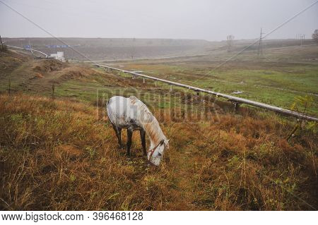 Horse Grazing Near Gas Pipes And Electric Poles During A Foggy Autumn Day.