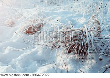 Winter field landscape, snowy winter plants at the snowy winter field. Snowy winter meadow scene, winter frosty plants, winter natural background