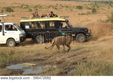 Masai Mara, Kenya - August 21, 2010 : Tourists In A Safari Minibus Looking The Male Lion Standing On