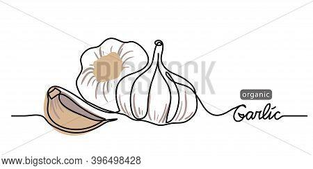 Garlic Vector Illustration, Background. One Line Drawing Art Illustration With Lettering Organic Gar