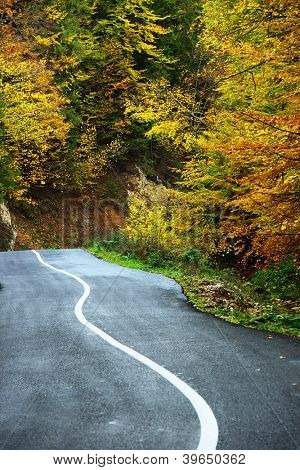 Curving road in autumn landscape