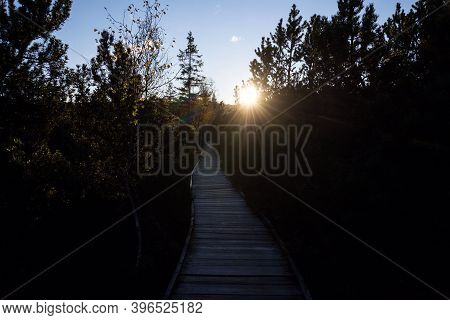 Wooden Footbridge Between Birch And Pine Trees During Sunset, Chalupska Slat, Sumava National Park,