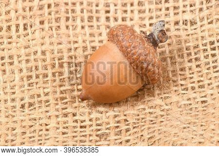 Acorn Of An Oak Tree Isolated On Sackcloth Background. High Resolution Photo. Full Depth Of Field.