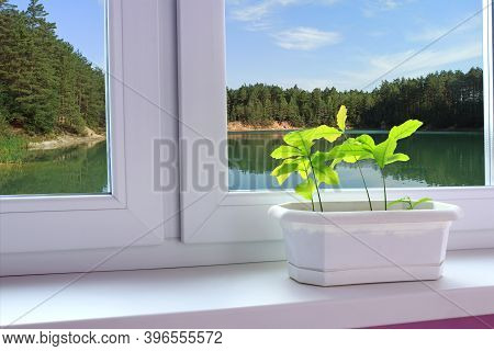 Young Plants Of Oaks On Window-sill And View To Forest Lake. Young Trees Ready To Planting. Beautifu