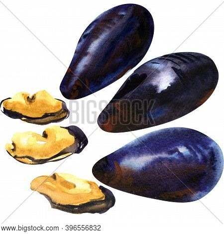 Mussel, Shell, Shellfish, Set Of Sea Mussels, Fresh Mollusk, Seafood, Close-up, Isolated, Hand Drawn