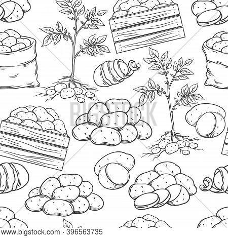 Potato Tubers Seamless Pattern Outline Hand Drawn Monochrome, Vector Ink Illustration. Backdrop Of E