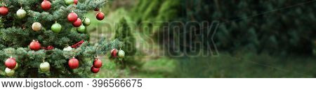 Decorated Christmas Tree In Pine Park. Merry Christmas. New Year Card. Trees Farm