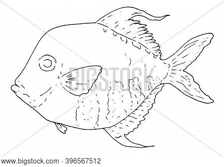 Hand-drawn Vector Illustration In The Sketch Style Of The Atlantic Moonfish Selene Setapinnis. Ocean