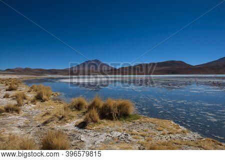 The Smelly Lake Hedionda (laguna Edionda) With Flamingos On The Bolivian Highlands, Bolivia