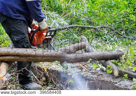 Professional City Utilities Cutting A Big Tree In The City After A Hurricane Storm Damage Trees A St