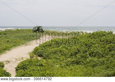 Sandy Pathway Through Vegetation Over Dunes At Beach