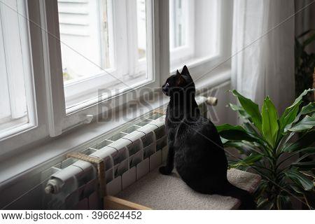 Close Up Of Black Cat. Black Cat Portrait. Close Up Of Cat Looking Through Window. Cat. Cat Sitting
