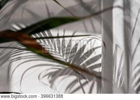 Light And Shadow Plant Reflection Wall Shade Black And White Green Yellow Random Artistic Fine Art P
