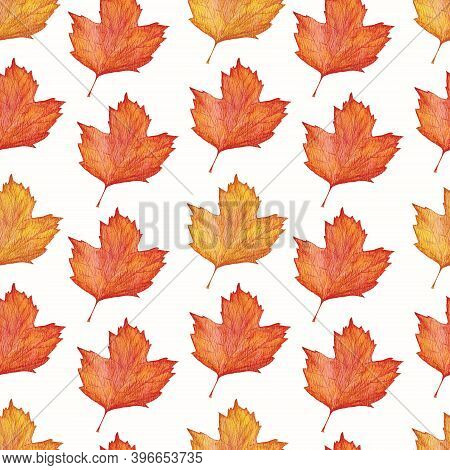 Watercolor Seamless Pattern With Autumn Viburnum Leaves On A White Background Viburnum Leaves In Yel