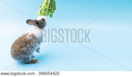 Furry Bunny Animal Eat Vegetable And Easter Concept. Adorable Little Young Brown And White Rabbits G