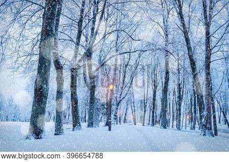 Winter Christmas landscape with falling snow, Christmas night winter city alley under falling snow. Winter night scene with Christmas and New Year mood, winter night alley, winter colourful scene, winter park view