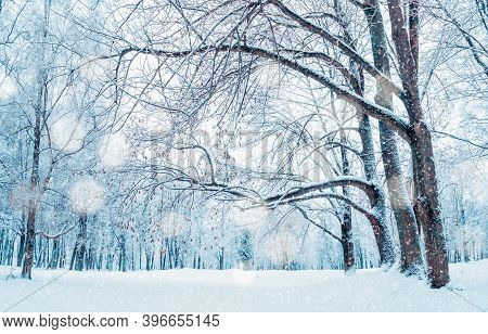 Winter landscape, winter park in cloudy winter weather under dense winter snowfall. Wonderland winter forest with snowfall over winter park