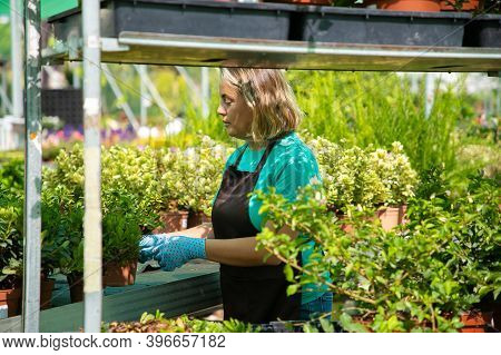 Blonde Woman Growing Plants In Greenhouse And Taking Care Of Flowers. Concentrated Female Gardener L