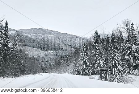 Coniferous Snowy Forest In The Rocky Mountains. The Road Between Tall Spruce Trees And Mountain Peak