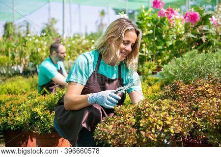 Happy Woman Working In Garden, Growing Plants In Pots, Cutting Branches With Pruner. Gardening Job C