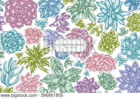 Floral Design With Pastel Succulent Echeveria, Succulent Echeveria, Succulent Stock Illustration