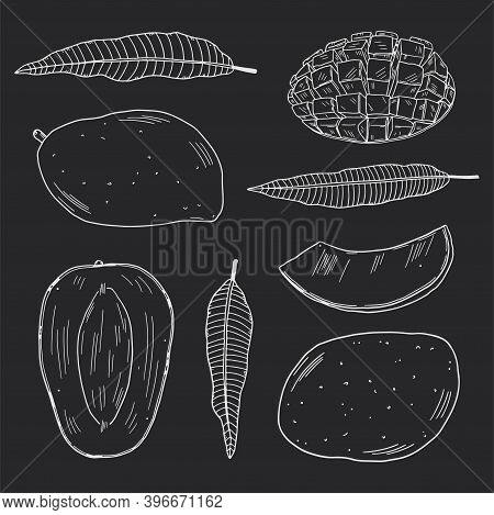 A Set Of Illustrations Of Mango Fruits In Different Types And Leaves Of The Mango Tree. White Outlin