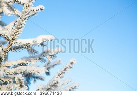 Snow Covered Winter Birch Tree Tops Blue Sky