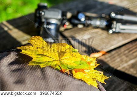 Colored autumn leaves with camera behind