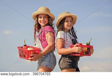 Village Rustic Style. Kids Gathering Vegetables In Basket. Selling Homegrown Food Concept. Vegetable