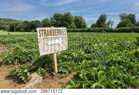 Wooden Sign With The Word Strawberries And A White Arrow Pointing To The Field With Some People Pick
