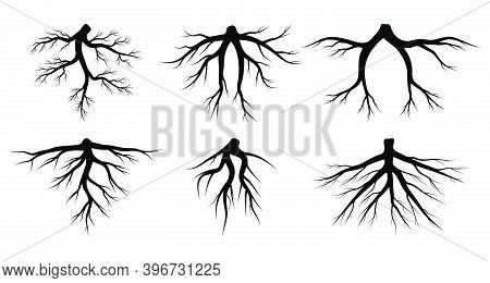 Root Vector Set Isolated On White Background. Tree Roots System Silhouettes Collection. Underground